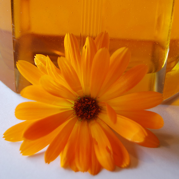 Calendula Infused in Sunflower Oil