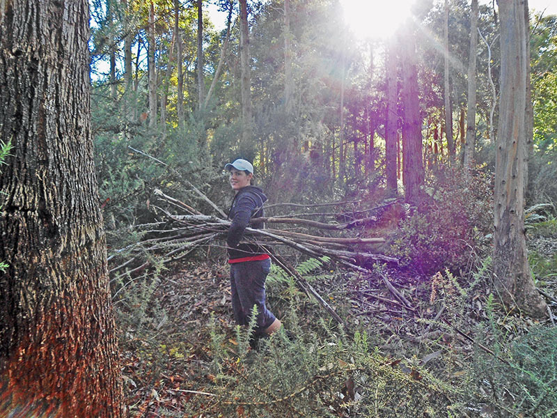 Rachel Gathering Wood