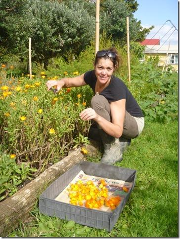 Ema picking Calendula flowers