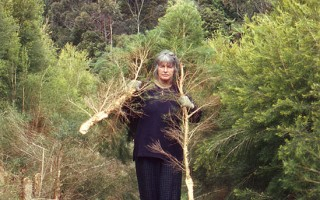 Margaret Harvesting Tea Tree Branches