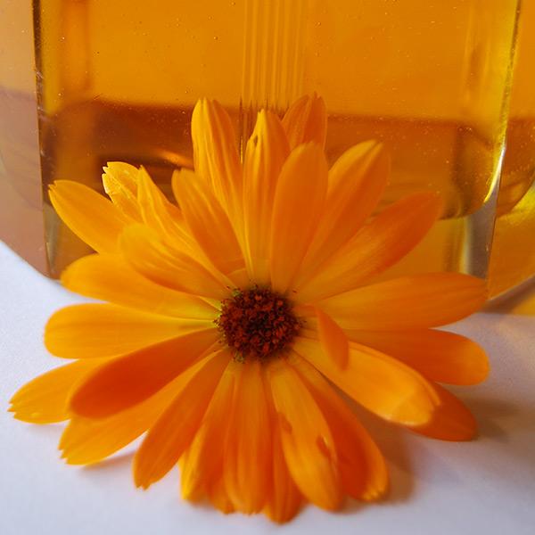 Calendula Infused in Sunflower Oil
