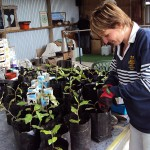 Vicki potting up seedlings